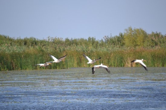 The Danube Delta –Paradise at the Shore of the Black Sea